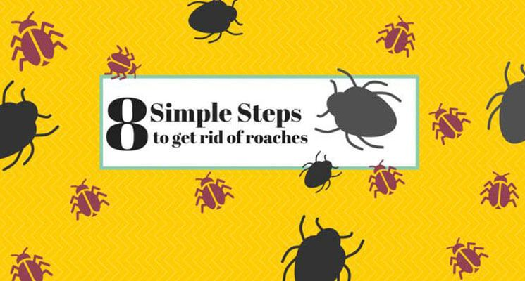 8 Simple Steps to Get Rid of Cockroaches - The Home Project