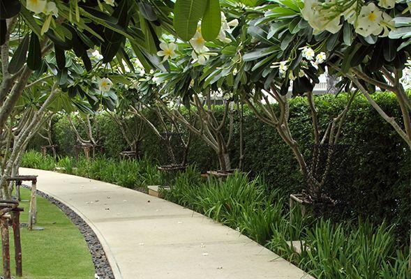 5 Landscaping Ideas for Your Dubai Garden - The Home ...