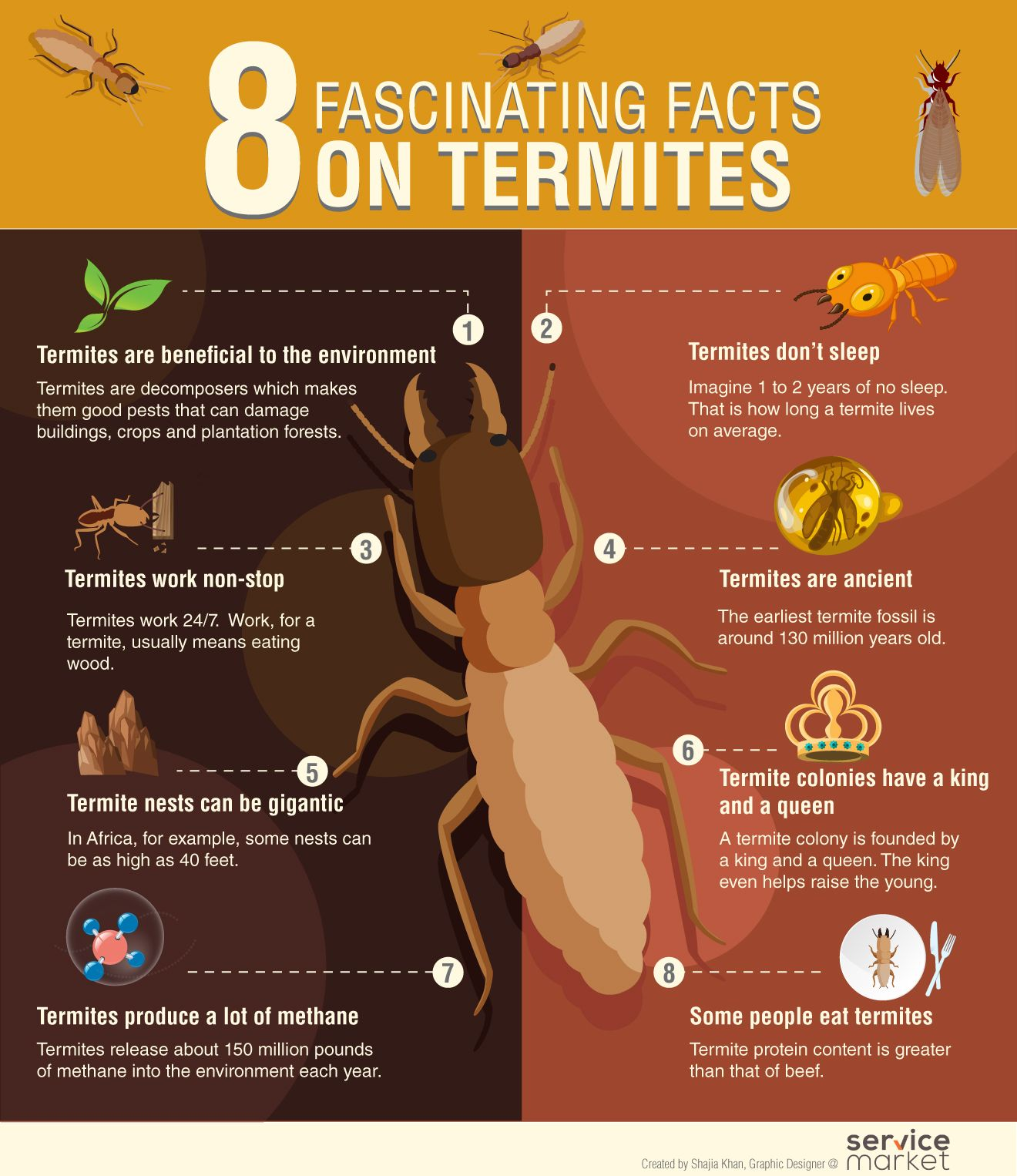 Fascinating Facts On Termites The Home Project