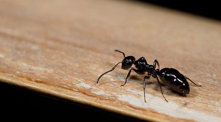 Pest Control 101: How to Prevent Ants from Invading Your Dubai Home - The  Home Project | ServiceMarket