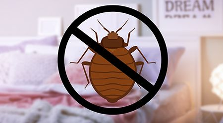 Pest Control in Dubai 101: Preparing Your Home for Bed Bug