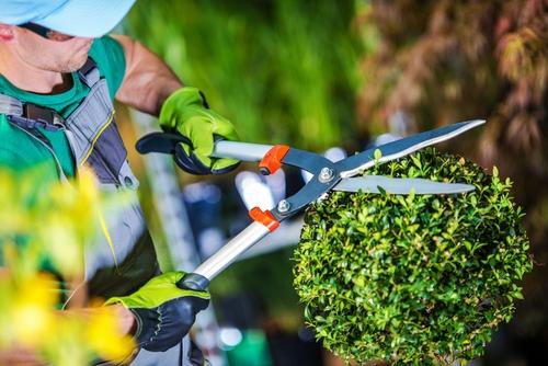 Gardening Companies in Dubai | Garden Maintenance Dubai