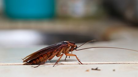 pest control services in sharjah for cockroach infestations
