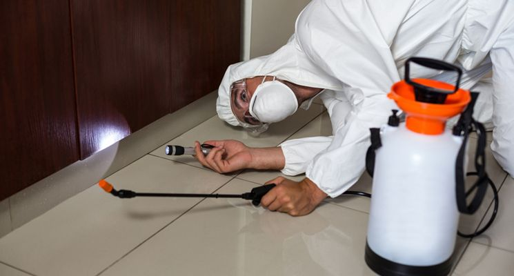 6 Reasons DIY Pest Control Should be Avoided in Dubai - The Home