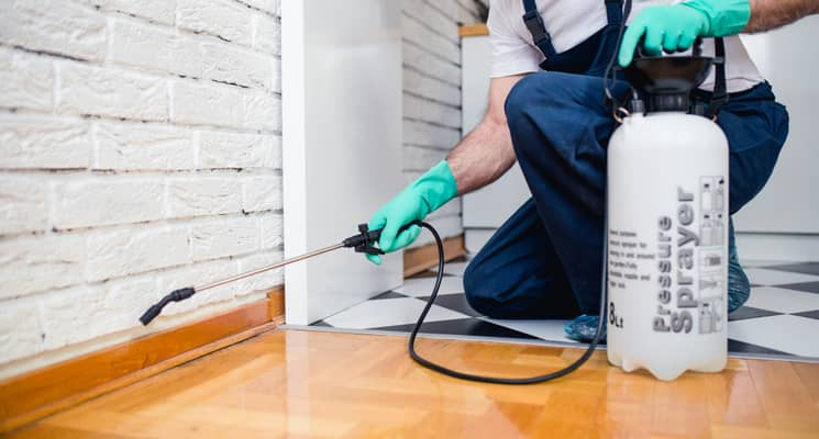 Pest control coral springs